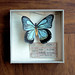 Watercolor butterfly specimen box