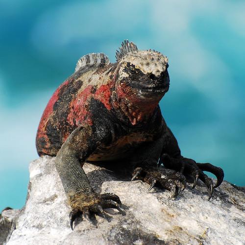 Galapagos Islands-480