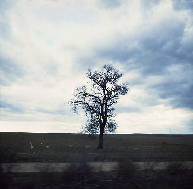 passing tree