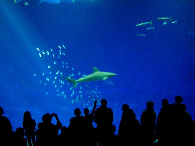 Monterey Bay Aquarium Explore Jugarsan 39 S Photos On