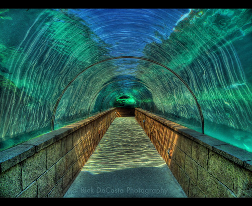 Underwater Tunnel, Atlantis, Bahamas HDR