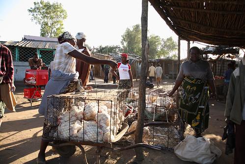 Запрет на продукты птицеводства привел к росту цен на птицу в Мозамбике