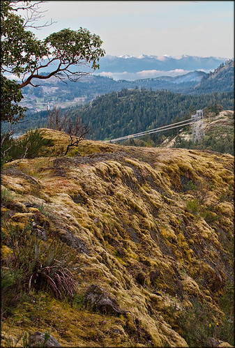nature landscape absolutelystunningscapes southvancouverisland lonetreehillpark