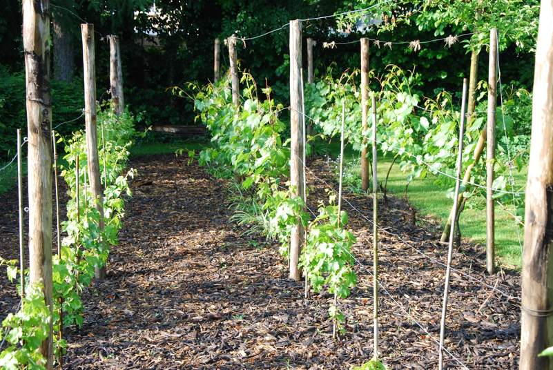 Backyard Vineyard Design : Small Backyard Vineyard  Specs, Price, Release Date, Redesign
