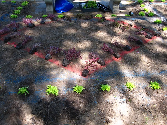 Plants are laid out and spaced on the colored lines for the Annual Border display.