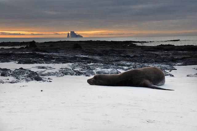 Lobo marino en la playa de Cerro Brujo, Galápagos