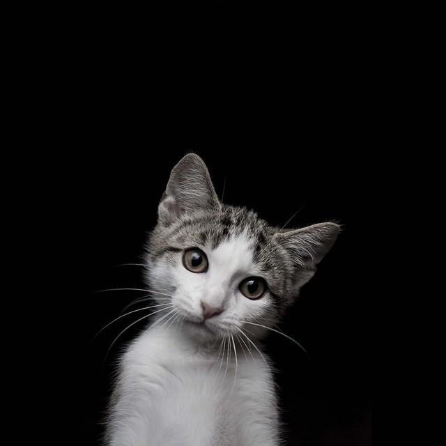 orinco cat
