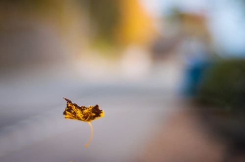 Falling leaves at f/1.7