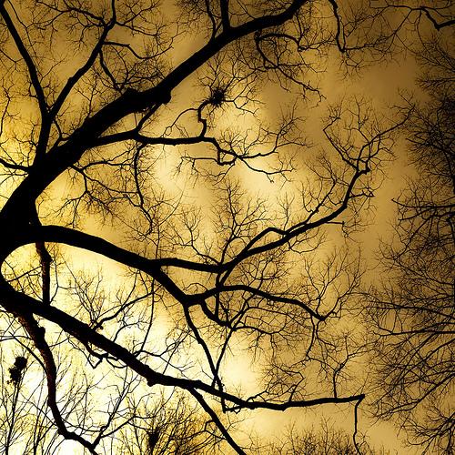 trees sky canon dc washington bokeh burning etsy elipse 50mmf14usm 5dmarkii dheml raceytay happymondyay mmmmyay ibrakeforbokehcom mondaynotblueatleastnothere ohalsopresettedwithraceybaker