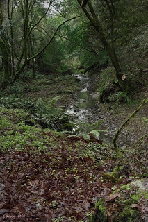 Alpine Creek in Heritage Grove Redwoods Preserve
