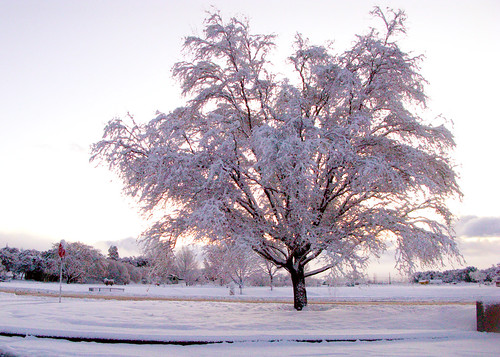 winter arizona snow cold tree ice sunrise frozen cool day payson