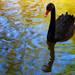 Swan Lake's Odile by j_aubz