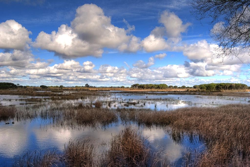 Humedales del Parque Nacional de Doñana, Huelva