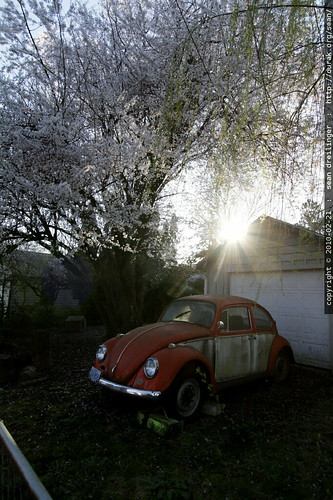 sun setting behind a vw beetle & cherry blossoms