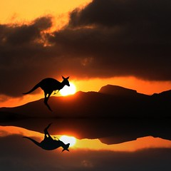 Australian Wildlife Reflection