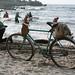 Gintaro žvejai