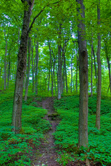 Emerald Trail - 2