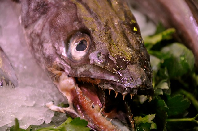 4524095045 9db3e0e3c3 for Ugly fish pictures