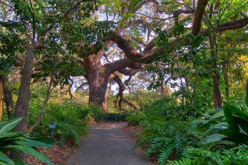 trees sculpture art sc gardens landscape path tripod southcarolina trail hdr gitzo murrellsinlet brookgreengardens photomatix 5exposure arcatech tokinaatx116prodx gt2531