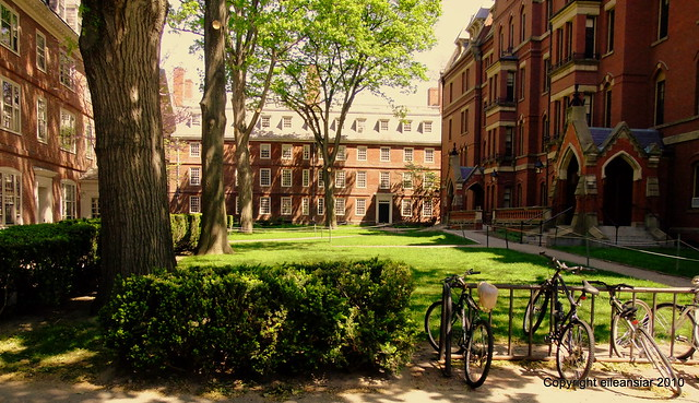Harvard's motif #1 - Straus, Massachusetts, and Matthews Hall in the Old Yard