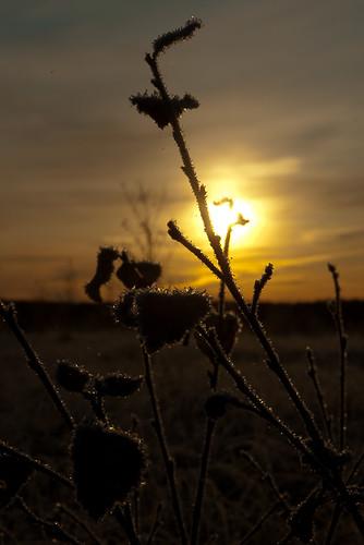 sunrise nationalpark pentax swamp kotka valkmusa mustajärvi k200d