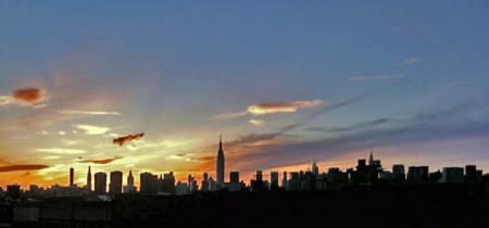 newyorkcity iphone ipad bulbanemone cushionstar culcitanovaeguineae anyperodonleucogrammicus entacmaeaquadricolor slendergrouper margarethorwood mickhorwood willhorwood