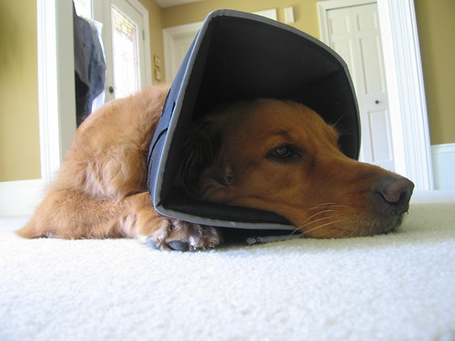 I do not like the cone of shame