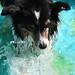 Splash! (23/52)