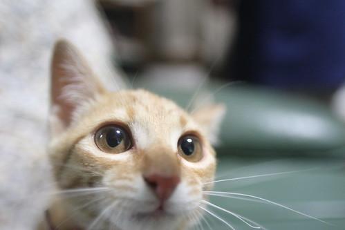 Cat, kirara-chan