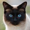 Reiz für Katzenallergiker by herwig henseler