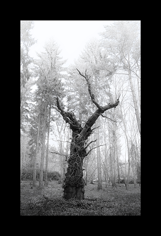 Photography: Dead Tree by Nicholas M Vivian