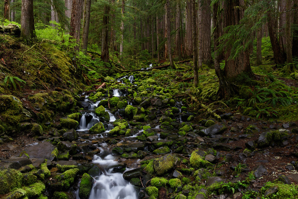 A stream flows past moss-covered rocks in the forest near Sol Duc in Olympic National Park