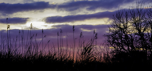 hillhead titchfieldhaven outdoors reeds sunset clouds tree evening colours nikon d5200 chriswillis3