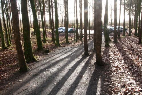 woods shadows