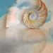 nautilus shell in clouds