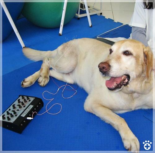 Acupuntura veterinária - Petlove - O Maior Petshop Online do Brasil