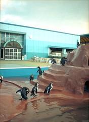 今度は南知多のペンギン by Noël Café