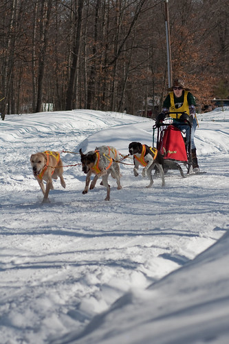 4379767100 52a4db979e Lost Lake Sled Dog Race