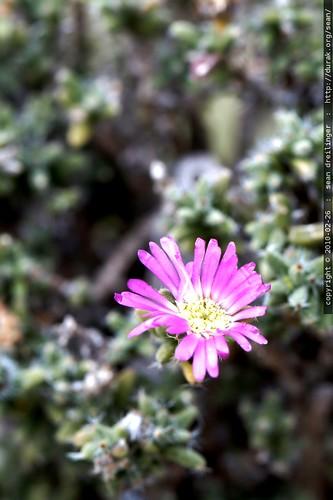 encinitas, leucadia, california, 2010-02-26… _MG_6579.ufraw
