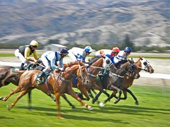 endurance riding(0.0), horse trainer(0.0), harness racing(0.0), animal sports(1.0), horse racing(1.0), racing(1.0), equestrian sport(1.0), sports(1.0), race(1.0), race track(1.0), jockey(1.0),