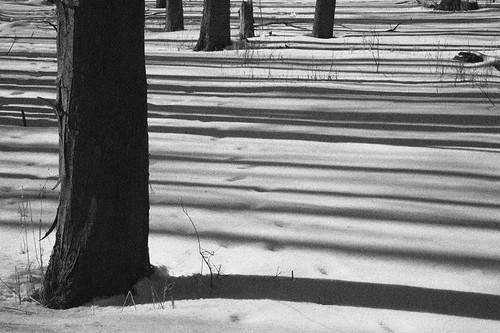 Snow Shadows by peterkelly