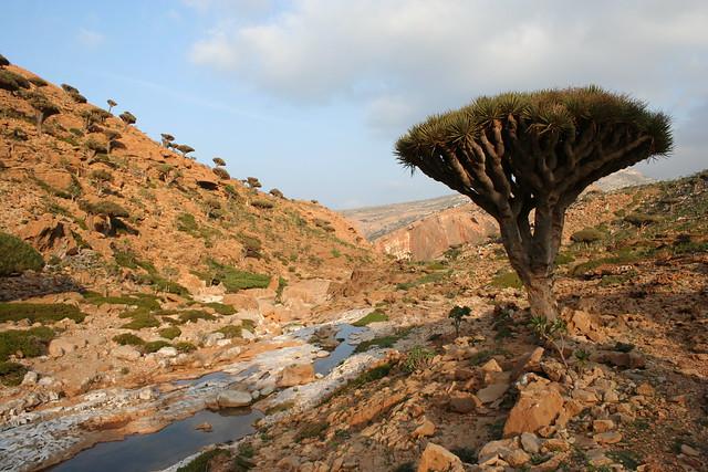 El archipiélago de Socotra, Yemen