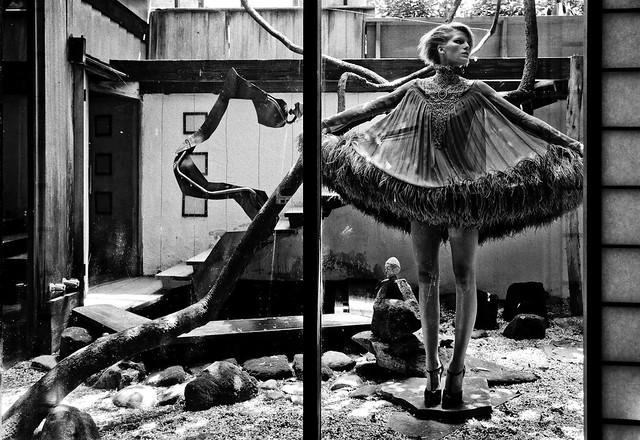 patric shaw - birdcage