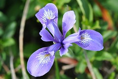 eye(0.0), iris(1.0), flower(1.0), iris versicolor(1.0), plant(1.0), wildflower(1.0), flora(1.0), petal(1.0),