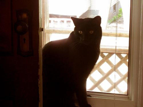 Cat-in-Window