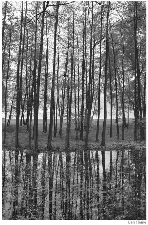 Forest in Katowice