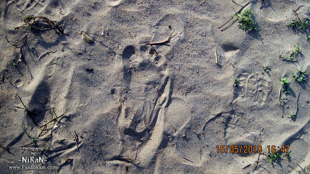 Its My FootSteps ;)
