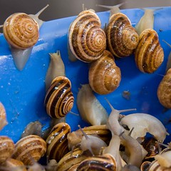 seafood(0.0), food(0.0), escargot(0.0), shiitake(0.0), sea snail(1.0), snail(1.0), invertebrate(1.0), seashell(1.0), produce(1.0),