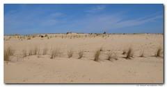 steppe, erg, soil, sand, plain, aeolian landform, natural environment, desert, dune, landscape, badlands,