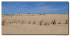 prairie(0.0), plateau(0.0), wadi(0.0), grassland(0.0), steppe(1.0), erg(1.0), soil(1.0), sand(1.0), plain(1.0), aeolian landform(1.0), natural environment(1.0), desert(1.0), dune(1.0), landscape(1.0), badlands(1.0),